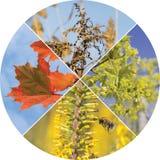 Colagem com quatro olhares das estações do ano Foto de Stock