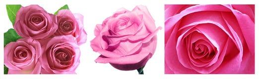 Colagem cor-de-rosa das rosas foto de stock