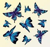 Colagem criativa com borboletas coloridas Fotos de Stock Royalty Free