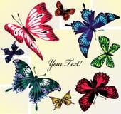 Colagem criativa com borboletas coloridas Fotos de Stock