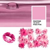 Colagem da cor na moda das fotos dos espírito de kindred cor-de-rosa do rosa 14-2311 de prisma do ano 2018 com ultravioleta Bloss Imagens de Stock Royalty Free