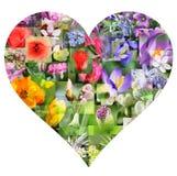 Colagem da flor da mola na forma do coração foto de stock royalty free