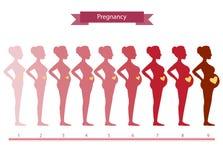 Colagem da mulher em fases no branco, ilustrações da gravidez Foto de Stock Royalty Free