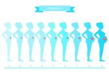 Colagem da mulher nas fases isoladas no branco, ilustrações da gravidez Foto de Stock