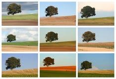 Colagem da paisagem Foto de Stock Royalty Free