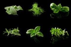 Colagem das ervas no fundo preto Imagem de Stock