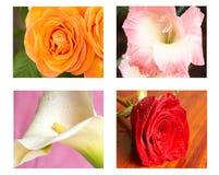 Colagem das flores imagens de stock