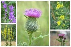 Colagem das flores Fotos de Stock