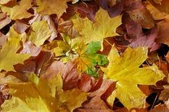 Colagem das folhas caídas imagens de stock