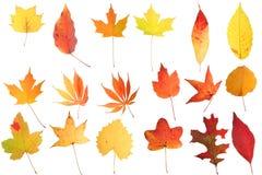 Colagem das folhas de outono Imagens de Stock Royalty Free