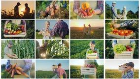 Colagem das fotos de cultivar atividades e da colhê-las imagem de stock