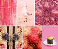 Colagem das fotos em cores cor-de-rosa Foto de Stock