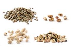 Colagem das leguminosa que incluem as lentilhas, os grãos-de-bico, os feijões de pinto e as leguminosa da mistura isolados Fotos de Stock