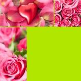 Colagem das rosas Fotos de Stock Royalty Free