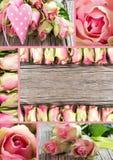 Colagem das rosas foto de stock