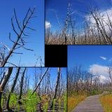 Colagem de árvores queimadas imagens de stock
