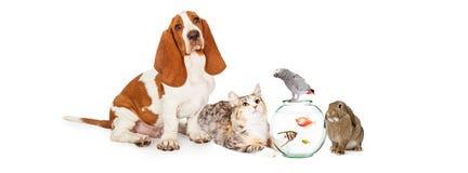 Colagem de animais de estimação domésticos junto foto de stock royalty free