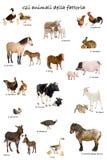 Colagem de animais de exploração agrícola no italiano Fotos de Stock Royalty Free