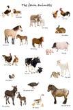 Colagem de animais de exploração agrícola em inglês na frente do whi Imagem de Stock Royalty Free