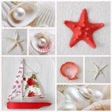 Colagem de estrelas de mar Imagem de Stock Royalty Free