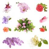 Colagem de flores bonitas da mola imagem de stock