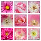 Colagem de flores cor-de-rosa Fotografia de Stock