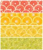 Colagem de frutos frescos do verão Fotografia de Stock