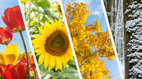 Colagem de quatro estações - mola, verão, outono, inverno Foto de Stock Royalty Free