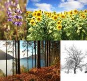 Colagem de quatro imagens das estações Fotos de Stock