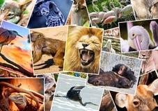 Colagem diferente dos animais imagens de stock royalty free