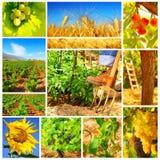Colagem do conceito da colheita Fotos de Stock Royalty Free