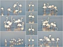 Colagem do flamingo fotografia de stock royalty free