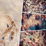 Colagem do inverno minhas imagens Foto de Stock Royalty Free