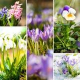 Colagem do jardim da mola Imagem de Stock Royalty Free