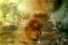 Colagem do outono Imagem de Stock Royalty Free