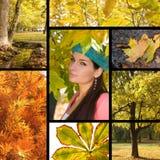 Colagem do outono Fotografia de Stock