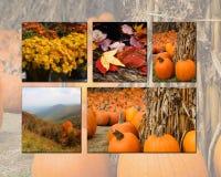 Colagem do outono Imagens de Stock
