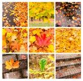 Colagem do outono que mostra paisagens diferentes do outono Foto de Stock Royalty Free