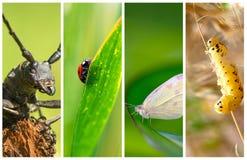 Colagem do tipo diferente dos insetos Fotografia de Stock