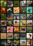 Colagem dos animais Imagem de Stock Royalty Free