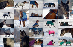 Colagem dos cavalos que jogam na neve imagens de stock royalty free