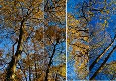 Colagem dos dosséis de árvore Fotografia de Stock
