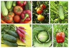 Colagem dos lifes imóveis com vegetais Foto de Stock Royalty Free