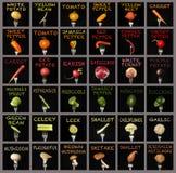 Colagem dos vegetais Foto de Stock Royalty Free