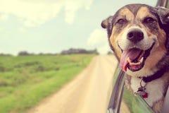 A colagem feliz do cão dirige para fora a janela de carro
