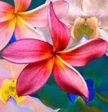 Colagem floral Fotos de Stock Royalty Free