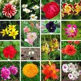 Colagem floral fotos de stock