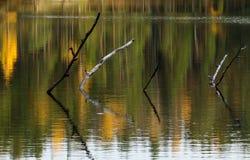 Colagem fora do lago Foto de Stock Royalty Free