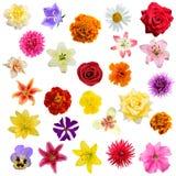 Colagem grande das flores Imagens de Stock Royalty Free
