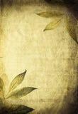 Colagem orgânica do outono Imagens de Stock